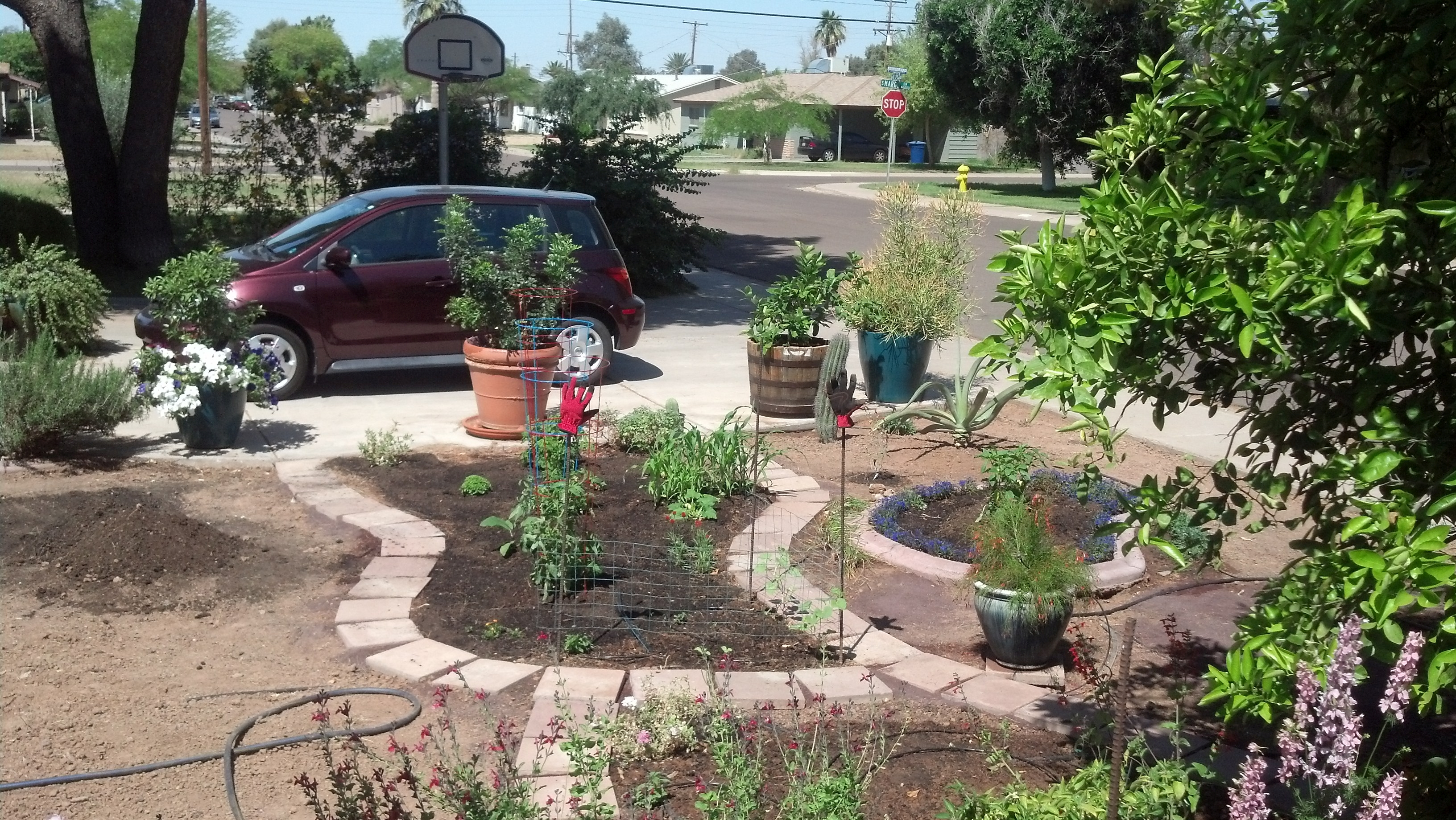 Garden Guru AZ Front Yard 13 April  2014