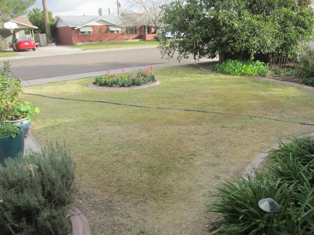Garden Guru AZ Front Yard Before 2