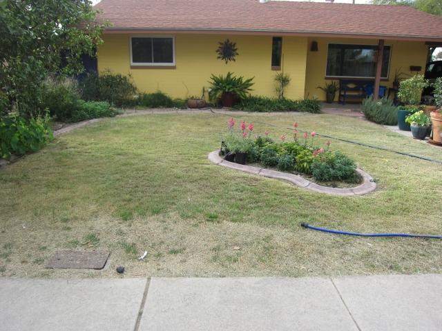 Garden Guru AZ Front Yard Before