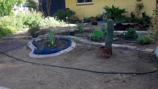 Garden Guru AZ Front Yard Plantings 5