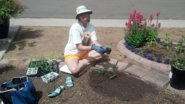 Garden Guru AZ Seedlings