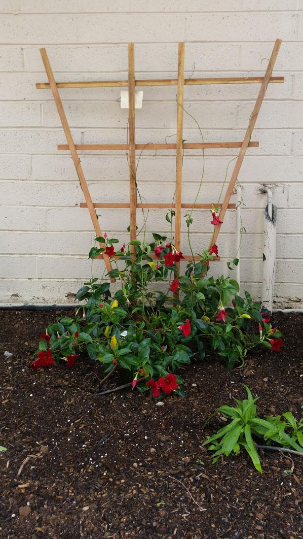 Border Garden After